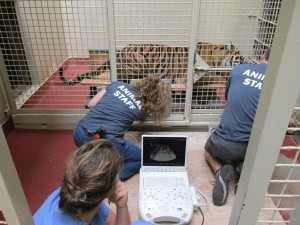 Animal Trianing and Enrichment 2