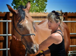 Positive reinforcement horse training.