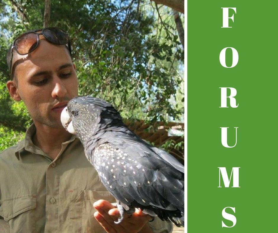 FORUMS (1)