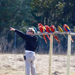 Free flight Macaws & interpersonal relationships – Chris Jenkins (COO of Natural Encounters, Orlando, Florida). – .