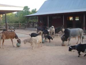 Farm, feeder3, B.C.