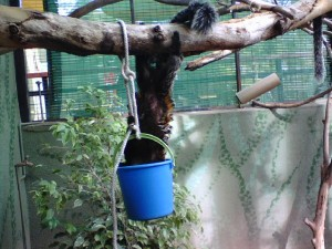 Marmoset with bucket feeder