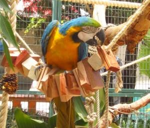 shape parrot