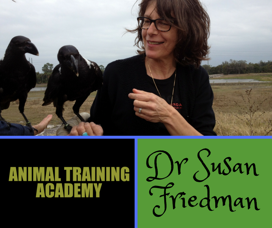 LIVE Q&A with Dr. Susan Friedman (Web-class replay)