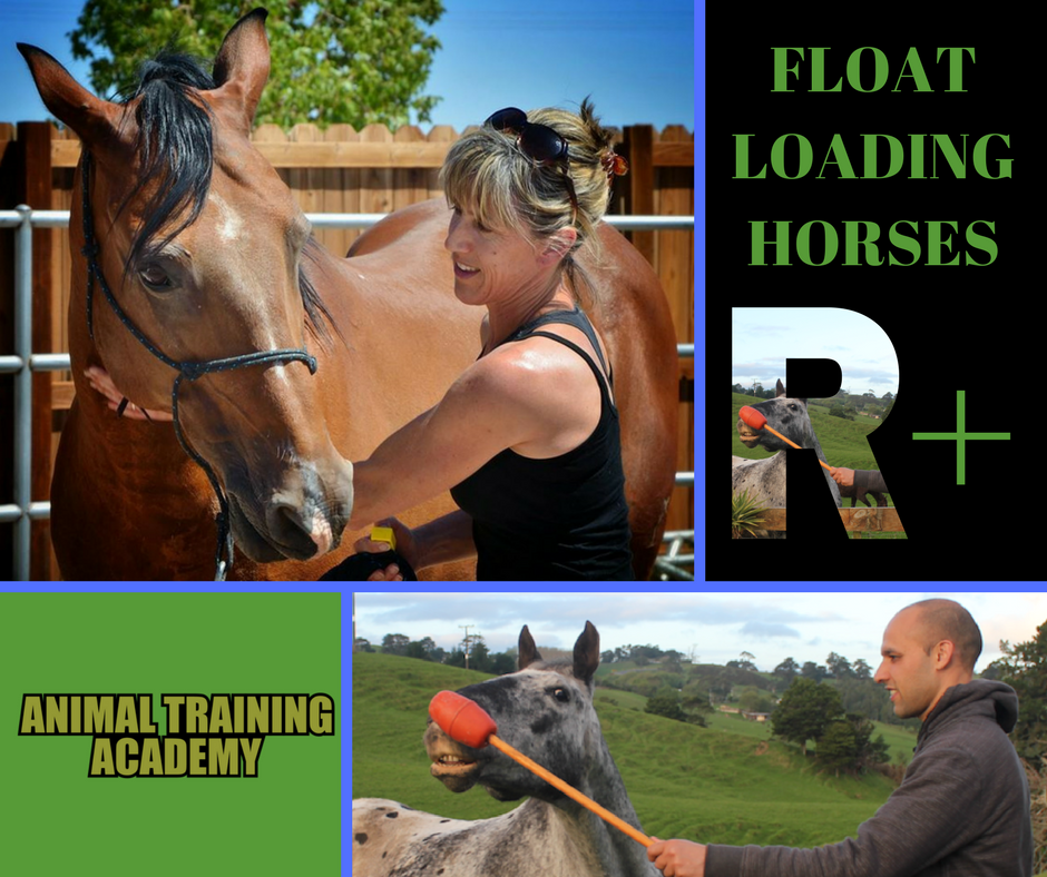 Float loading horses with Kate Southcombe (Web-class replay)