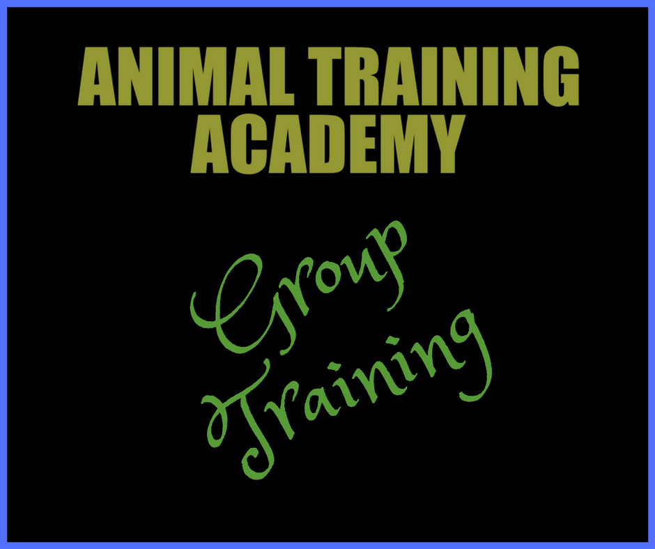 Group training (Web-class replay)
