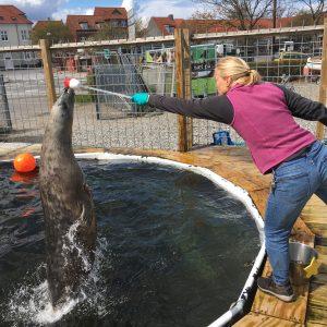 Kirstin Anderson Hansen – Marine animal behavior and bioacoustics team