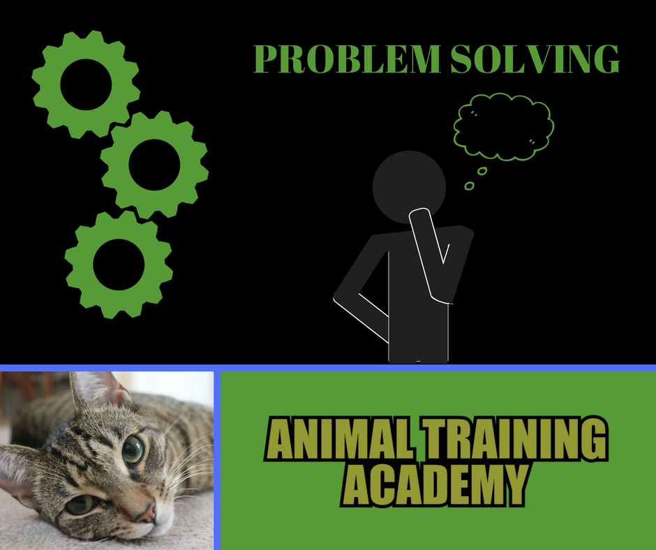 Problem solving (Web-class replay)