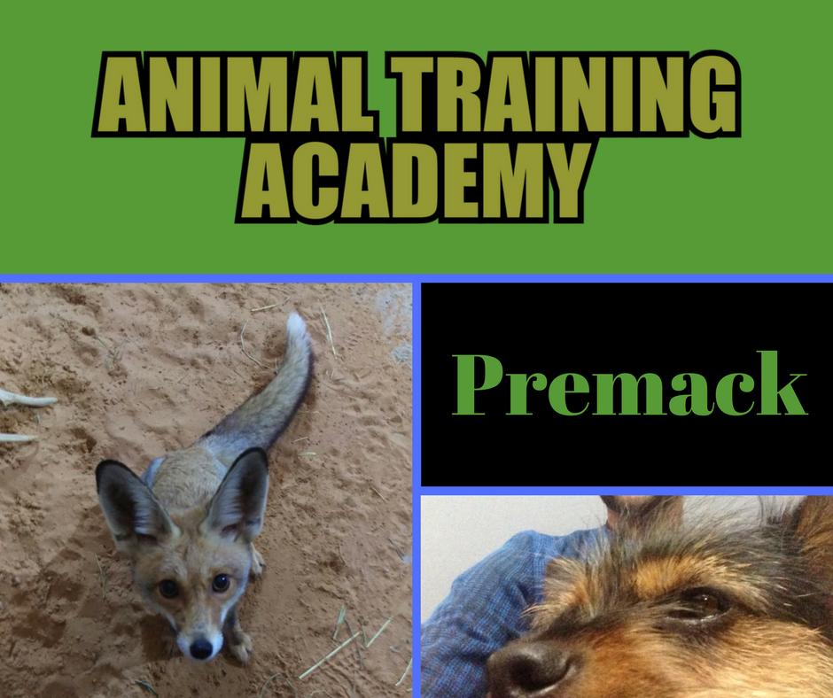 Premack principle (Web-class replay)