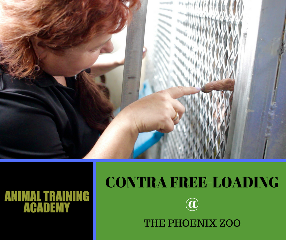 Contra Freeloading @ Phoenix zoo – Special guest Hilda Tresz (Web-Class replay)