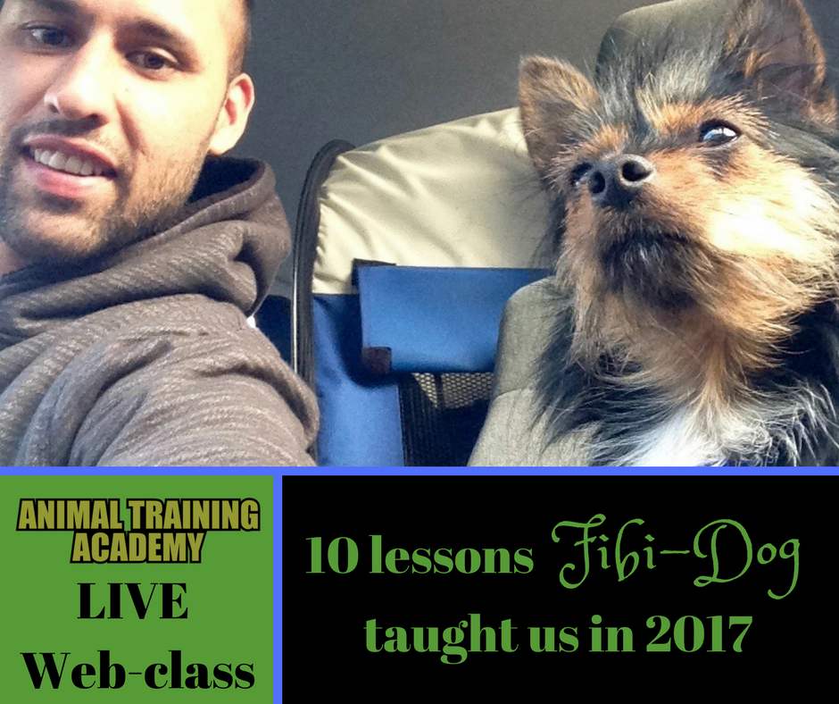 10 lessons Fibi-dog taught us in 2017 (web-class replay)