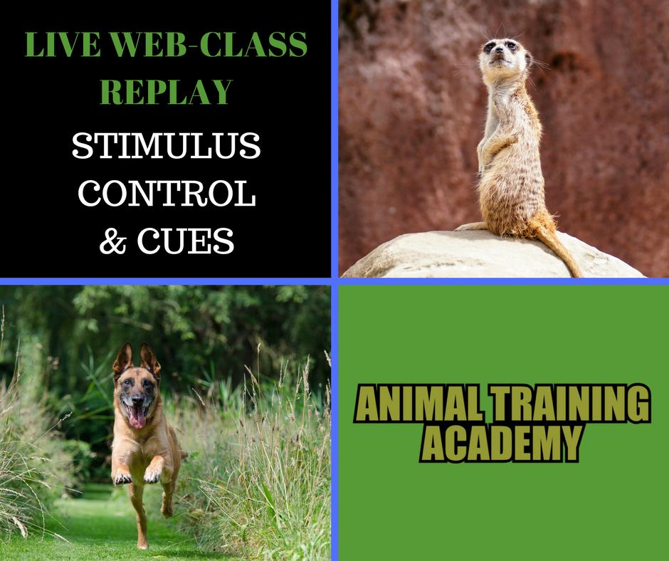 Stimulus control – Cues (Web-class)