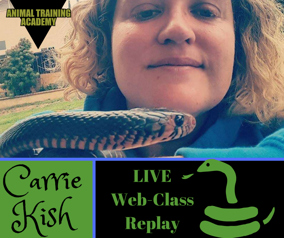 Snake training – Carrie Kish; Co-founder/director Reptelligence