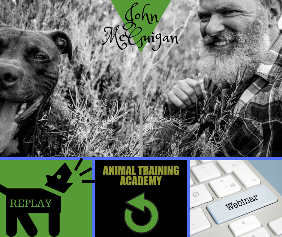Working with aggresive dogs – John McGuigan [Glasgow dog trainer]