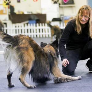 "Denise Fenzi – Fenzi dog sports academy; ""Stay in the happy bucket"""