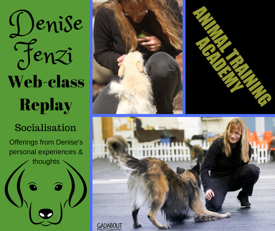 Denise Fenzi – Socialisation; Offerings from Denise's personal experiences & thoughts.