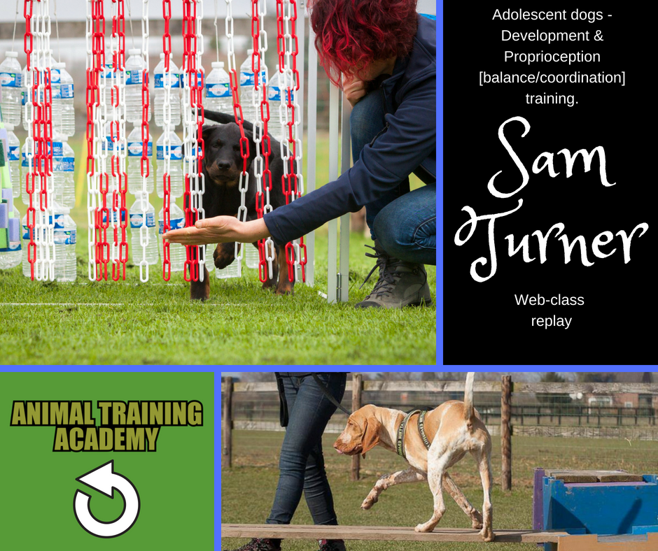 Adolescent dogs; Development & Proprioception [balance/coordination] training with very special guest – Sam Turner