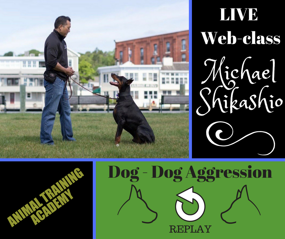 Dog – Dog Aggression with Michael Shikashio