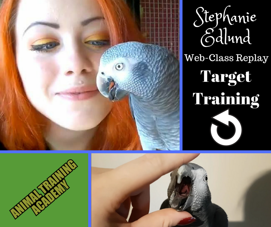 Target Training; With very special guest Stephanie Edlund – Understanding Parrots in Sweden