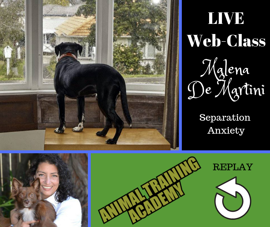 Separation anxiety with Malena DeMartini