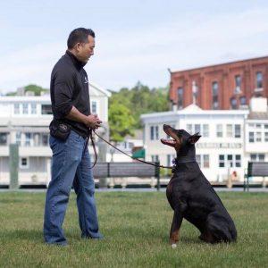 Michael Shikashio – Complete Canine: Aggressive dogs