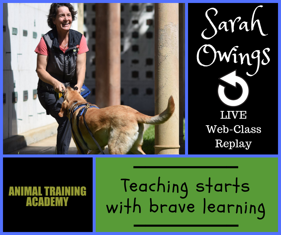 Sarah Owings – Teaching starts with brave learning