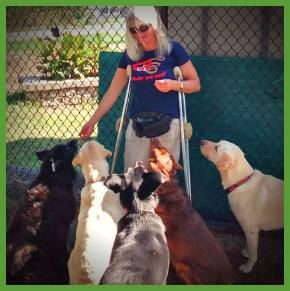 Joan Orr – Convergence of Human Training, Animal Training & Technology [CHATT]