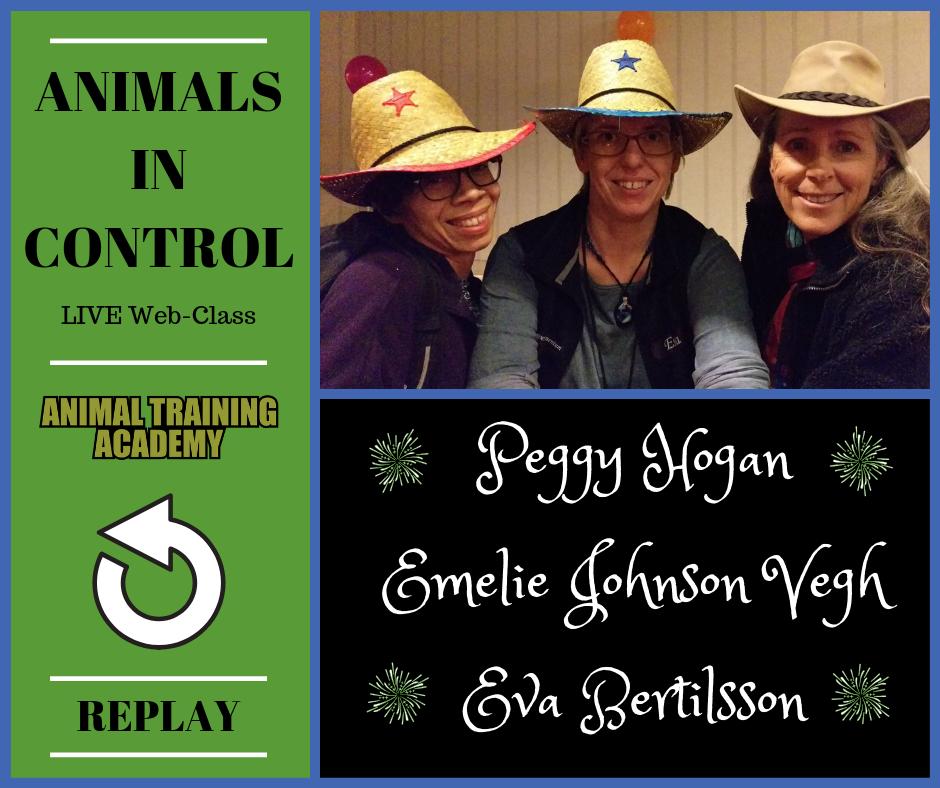 Animals in Control – Eva Bertilsson, Emelie Johnsnon Vegh & Peggy hogan