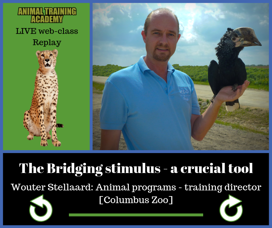 Wouter Stellaard – The bridging stimulus: a crucial tool