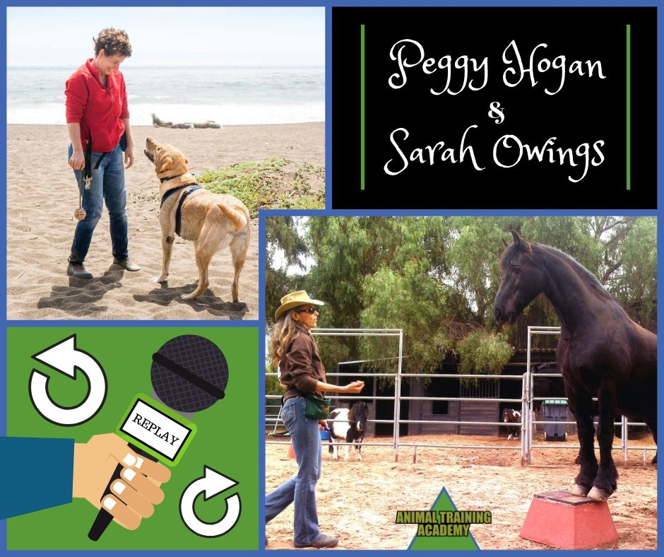 Peggy Hogan & Sarah Owings – Two Species, one journey! – Teaching animals to wait for cues without extinction