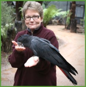 [Episode 99] Pamela Clark – 10 things parrot consultants need to know in 2019