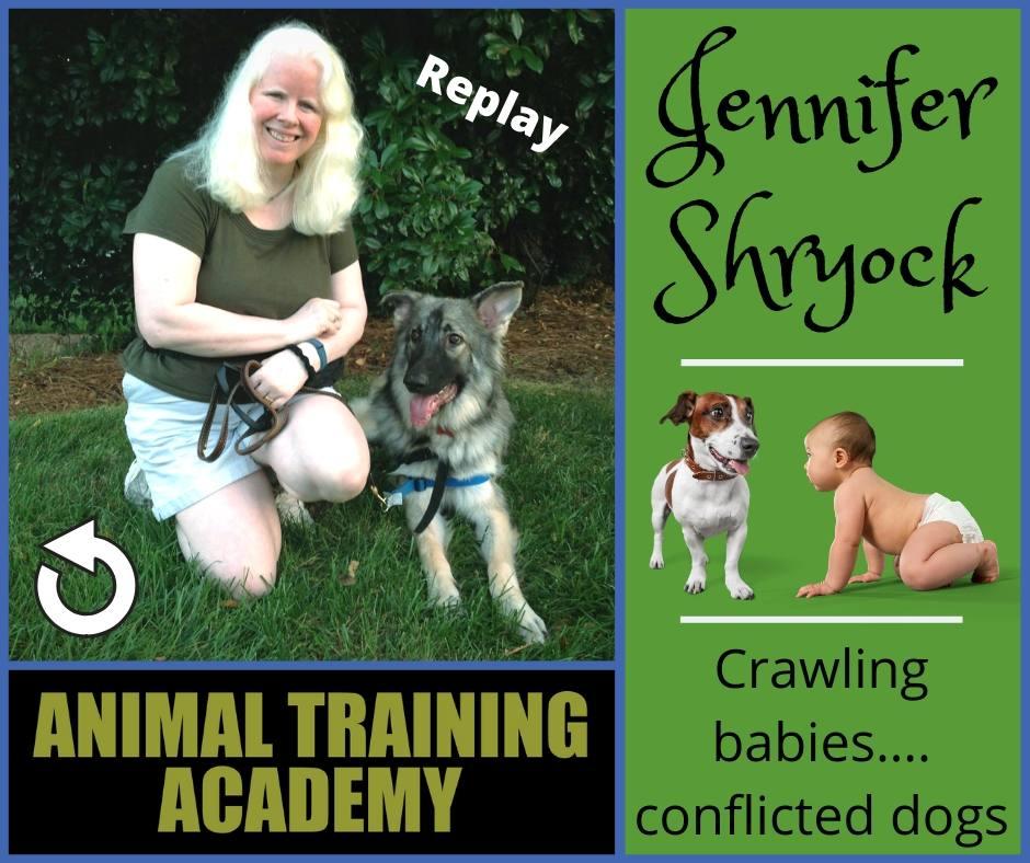 Jennifer Shryock – Crawling babies….conflicted dogs