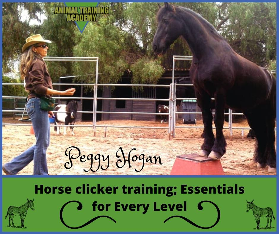 Peggy Hogan – Horse clicker training; Essentials for Every Level