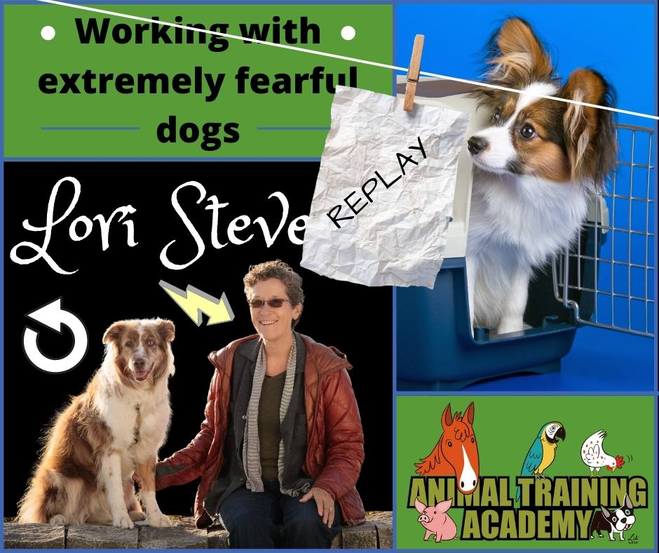 Working with extremely fearful dogs – Lori Stevens