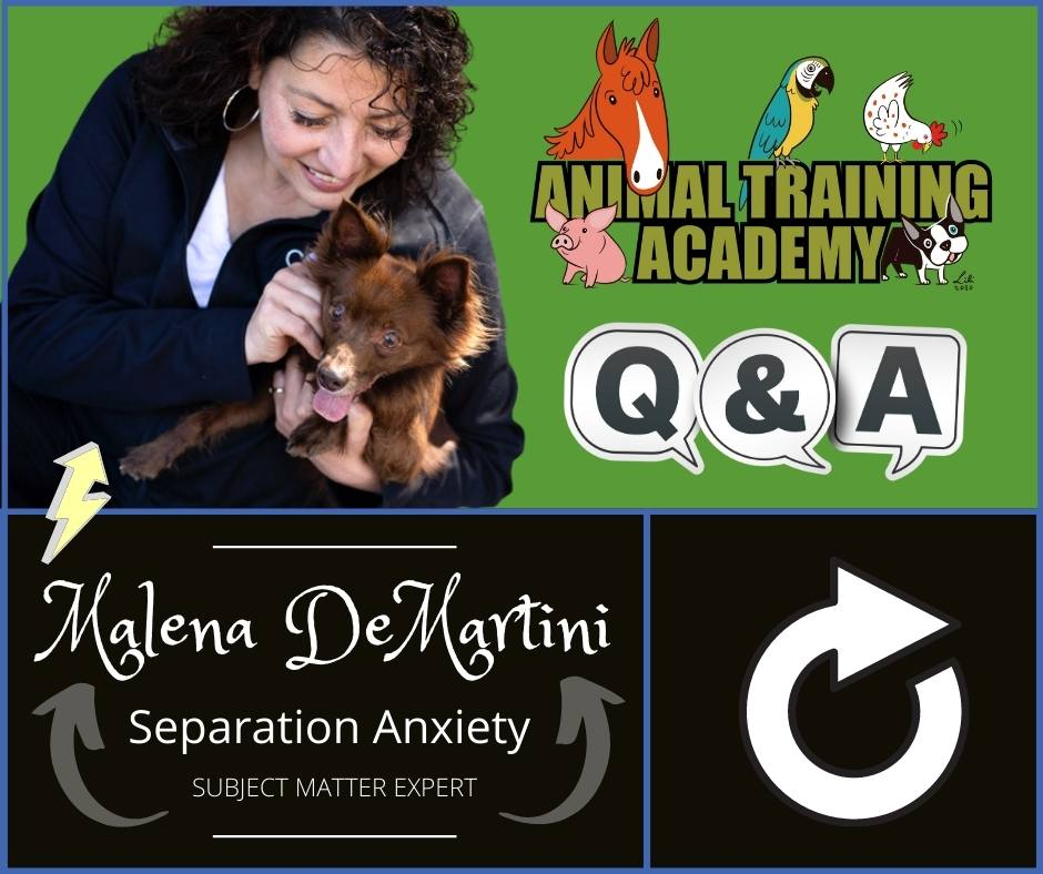 Malena DeMartini [Separation Anxiety] LIVE Q&A