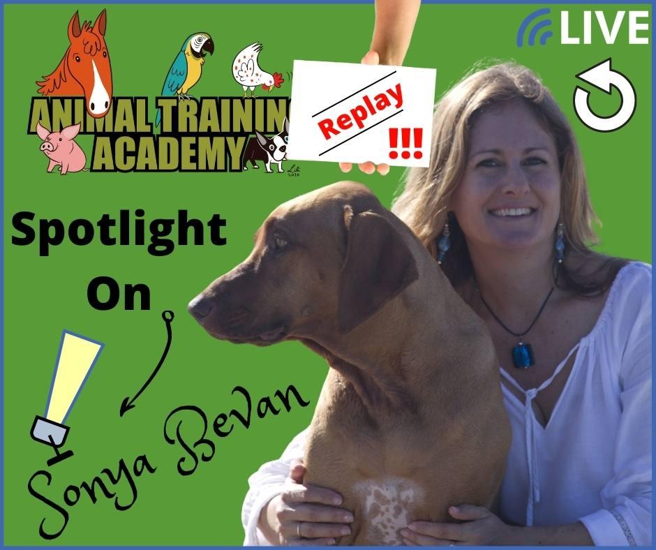 Spotlight on Sonya Bevan [Dog Charming, Western Australia] 💚