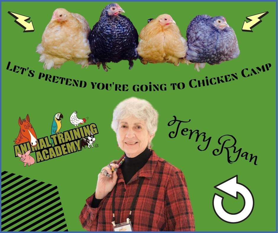 Let's pretend you're going to Chicken Camp – Terry Ryan